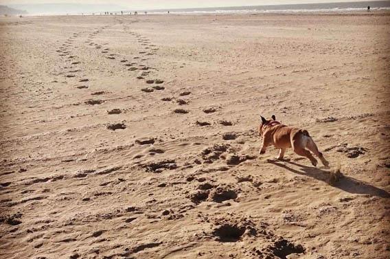 balades chien calvados normandie