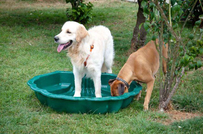 garde chiens lisieux normandie