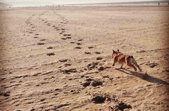 promenade chiens plage mer calvados normandie