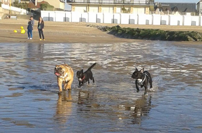promenade mer chiens côte fleurie