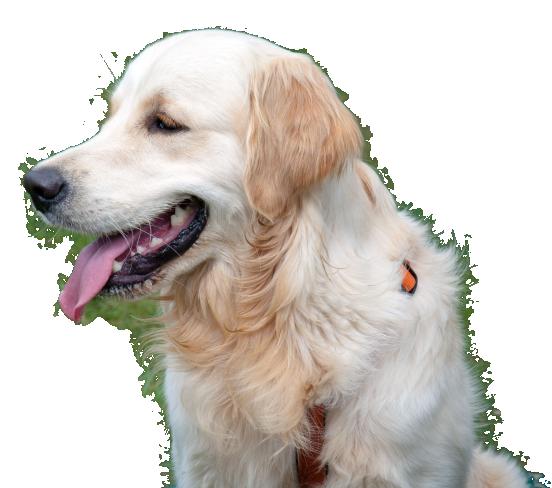 pension pour chiens lisieux calvados normandie