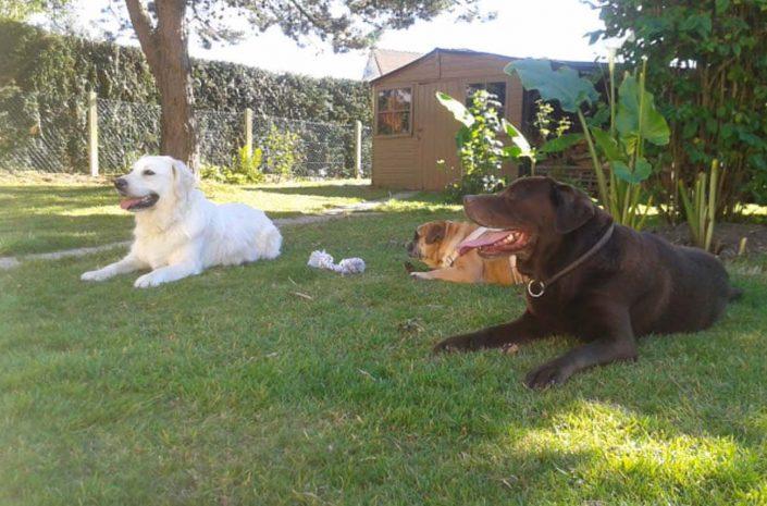 pension canine chiens calvados normandie lisieux