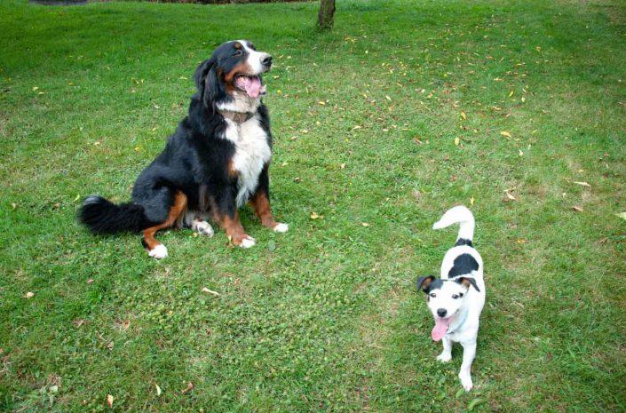 garde familiale chiens lisieux normandie