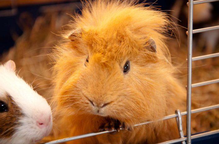 garderie nac hamster lisieux calvados normandie