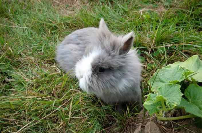 garderie nac lapin lisieux calvados normandie