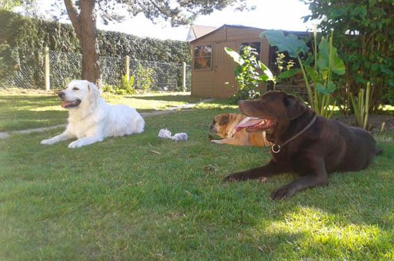 pension canine calvados lisieux normandie