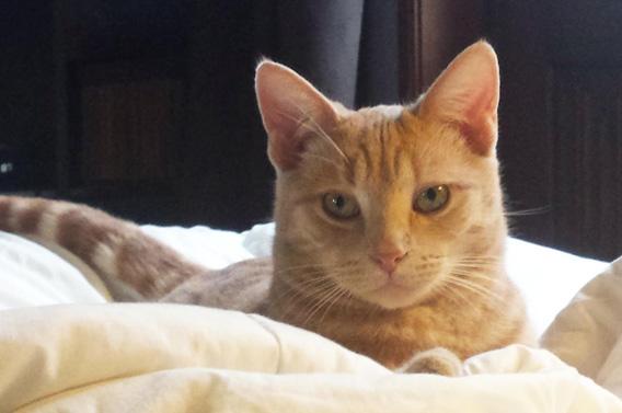 visite à domicile chats lisieux calvados normandie